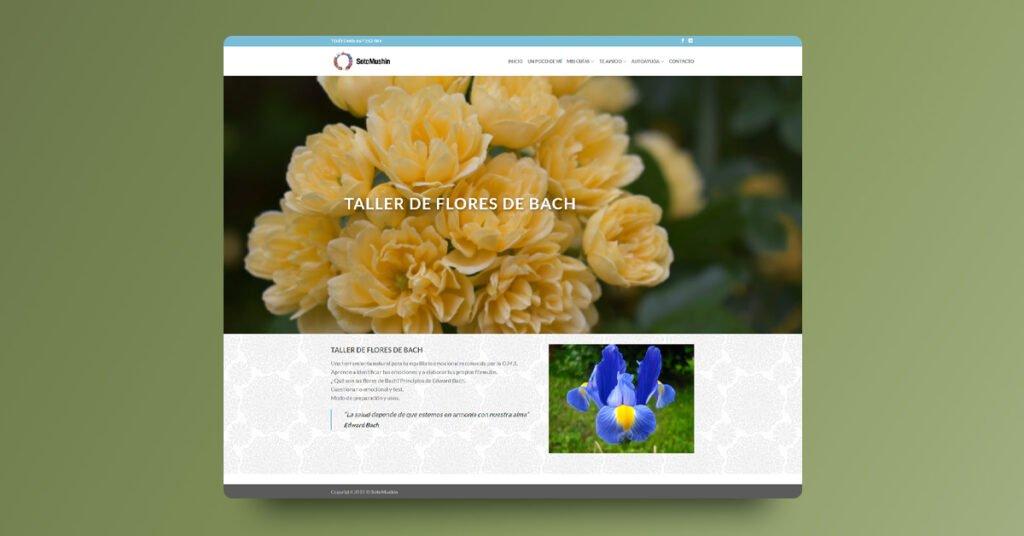 Diseño y programación web SotoMushin - Creaktiva